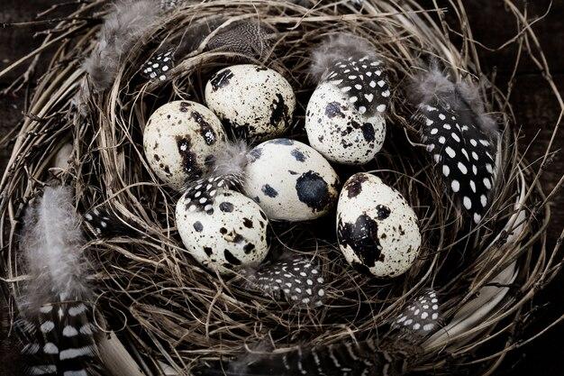 Vogels nestelen met eieren