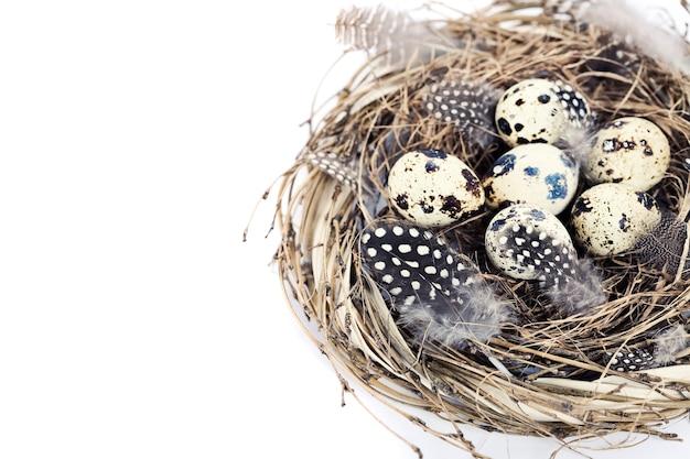 Vogels nesten met eieren (pasen samenstelling)