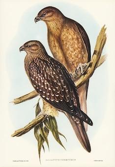 Vogels van australië