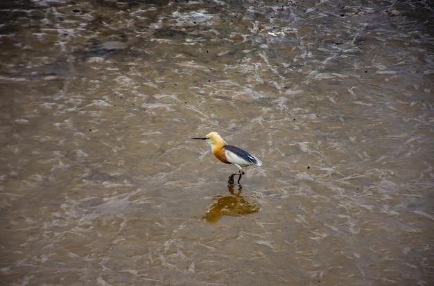Vogels voeden in de zee bij bang poo, samut prakan.