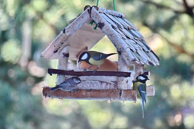 Vogels voeren in de frisse lucht. mees die wit brood eet.