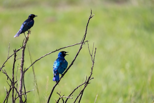 Vogels zittend op de takken van een boom