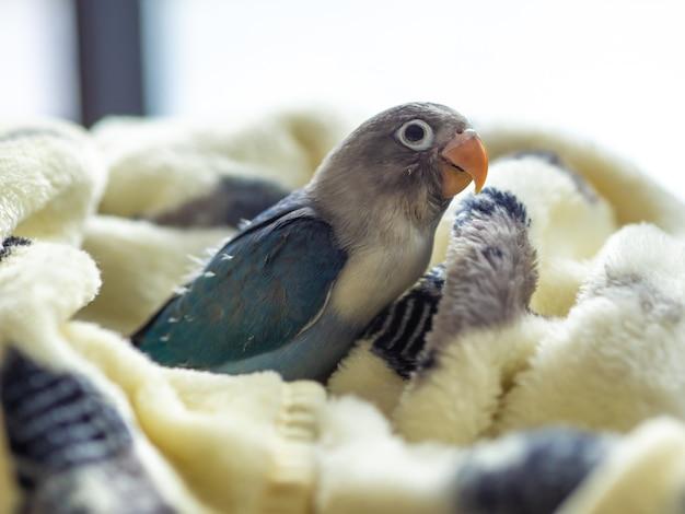 Vogelstand