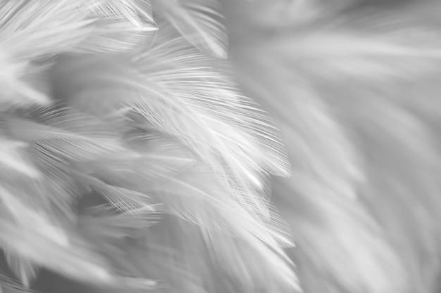 Vogelveer textuur voor achtergrond