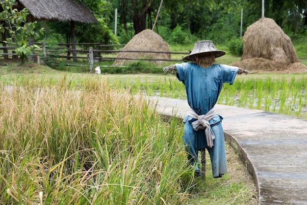 Vogelverschrikker die zich in een rijstlandbouwbedrijf bevindt.