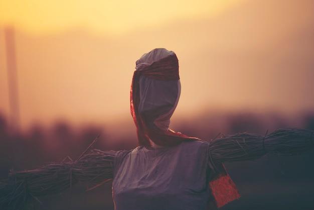 Vogelverschrikker in het padie-padieveld bij zonsondergang
