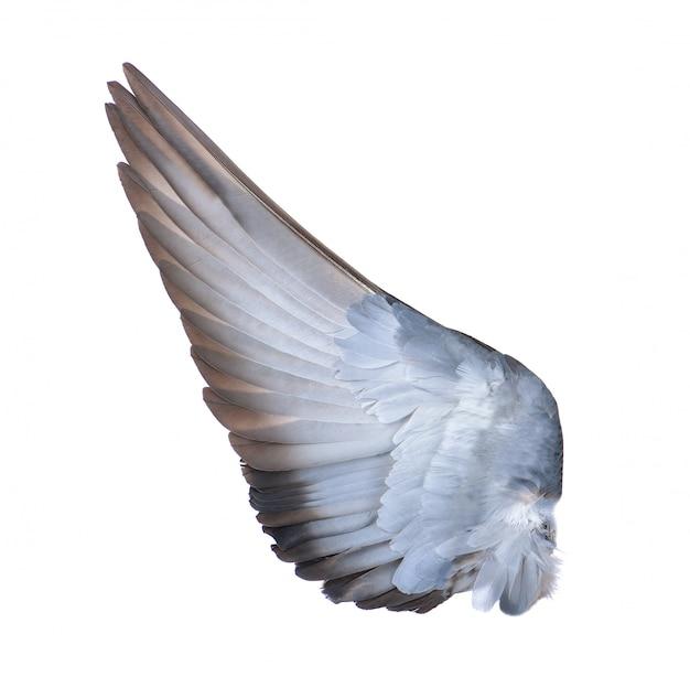 Vogelvleugel op witte muur