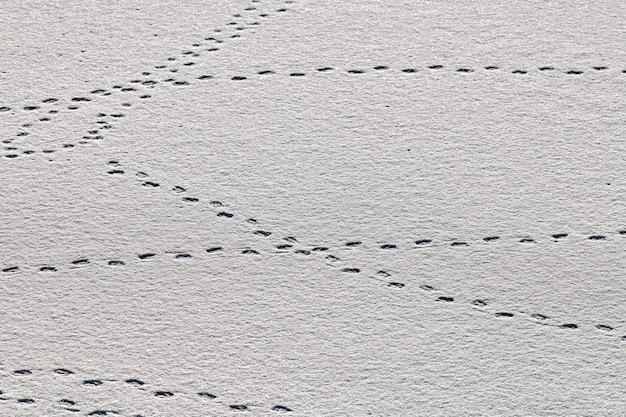 Vogelvoetafdrukken en sporen van vogels op witte sneeuw, close-up. winterse achtergrond.