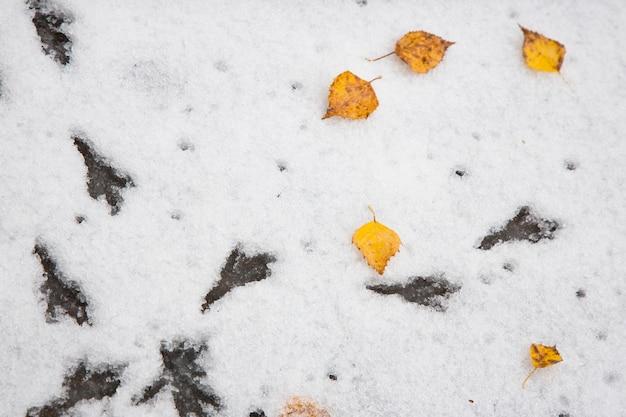 Vogelvoetafdrukken op de sneeuw. de eerste sneeuw, gevallen herfstbladeren. begin van de winter.