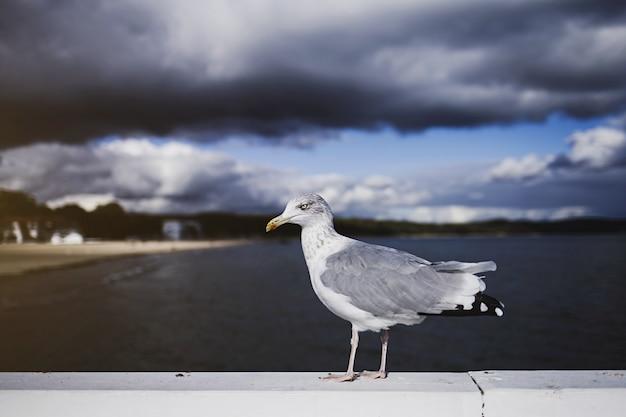 Vogelzeemeeuw op hemelachtergrond.