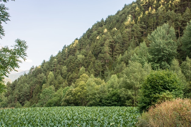 Vol met dennen in de pyreneeën