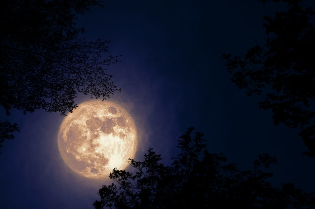 Volle bevermaan terug op donkere wolk op silhouetboom en de nachthemel