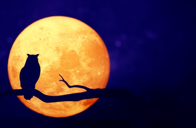 Volle maan in de nachtelijke hemel