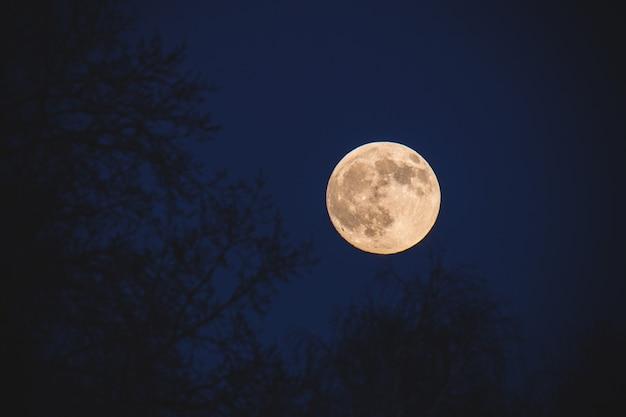 Volle maan in een donkerblauwe hemel 's nachts tegen een achtergrond van bomen in onscherp