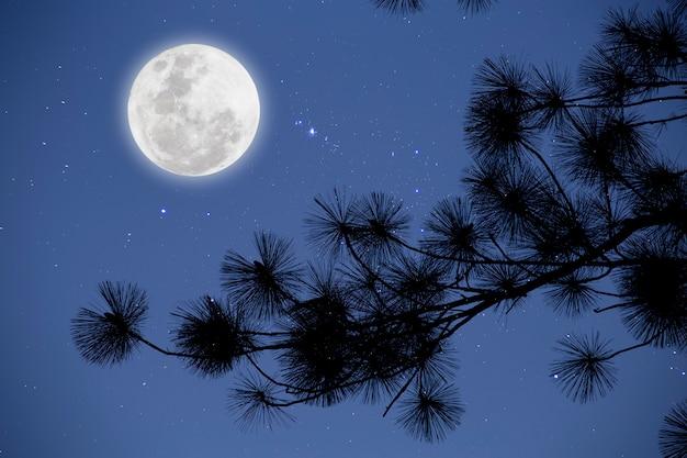 Volle maan met sterrenhemel over pijnboomtakken. romantische nacht