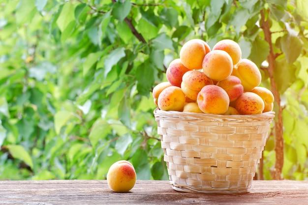 Volle mand met abrikozen in de tuin op een achtergrond van groen, zonlicht
