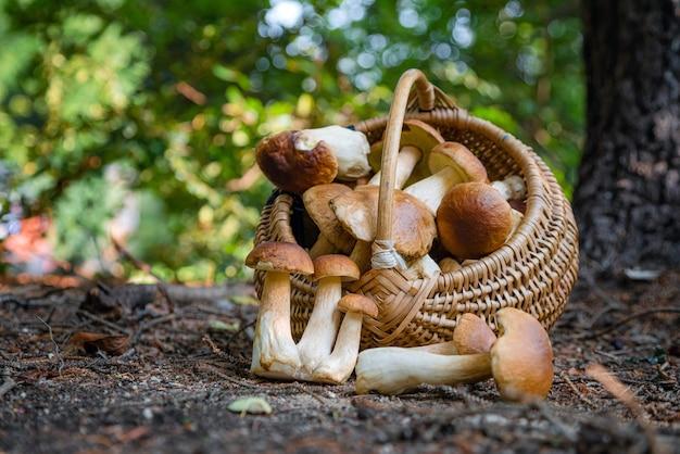 Volle rieten mand met boletus edulis-paddenstoel in het bos.