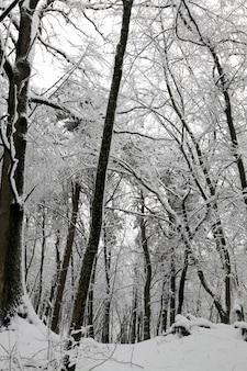 Volledig bedekt met sneeuw loofbomen in de winter, koude en besneeuwde winters, bomen groeien in het park of in het bos in witte sneeuw na een sneeuwval