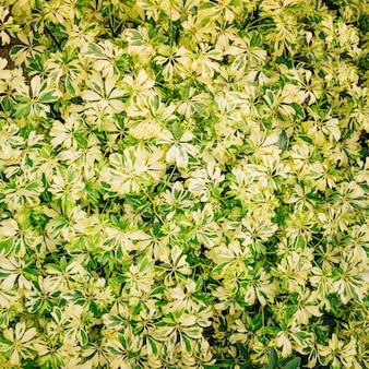 Volledig frame van kleurrijke bladeren voor de achtergrond