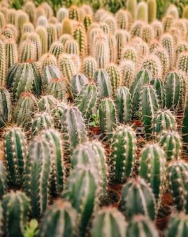 Volledig kader van cactusinstallatie met doornen
