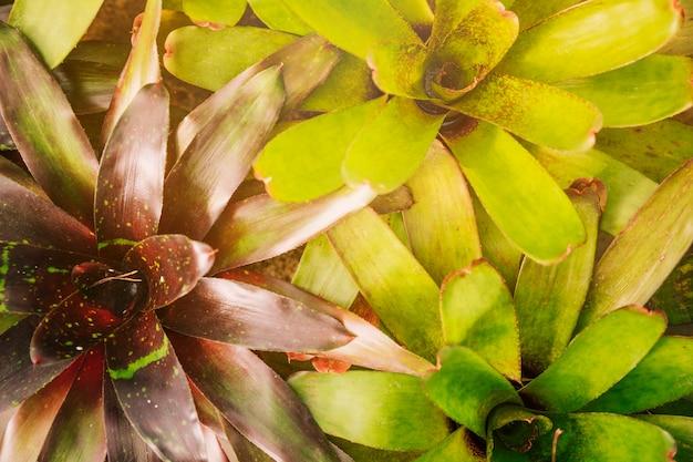 Volledig kader van de bladerenachtergrond van de bromeliainstallatie