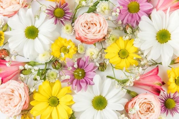Volledig kader van verse chrysanthemum; kamille; roos; baby's adem en alstroemeria