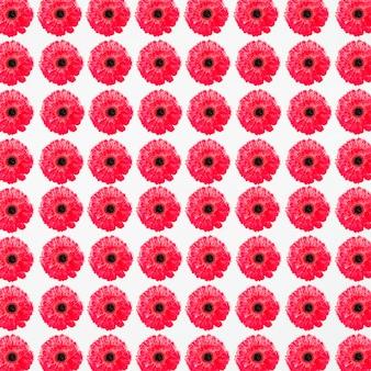 Volledig kaderschot van gevoelige rode bloemen