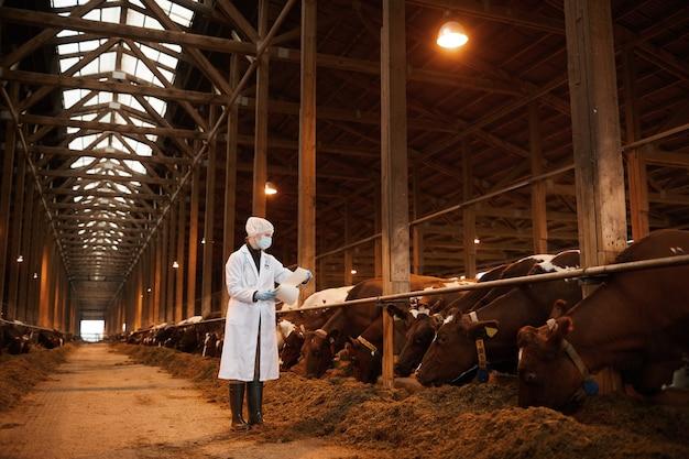 Volledig lengteportret van jonge vrouwelijke dierenarts die koeien op melkveebedrijf onderzoekt terwijl het dragen van masker en laboratoriumjas, exemplaarruimte