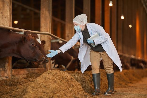 Volledig lengteportret van vrouwelijke dierenarts die masker op boerderij draagt tijdens het inspecteren van koeien en vee