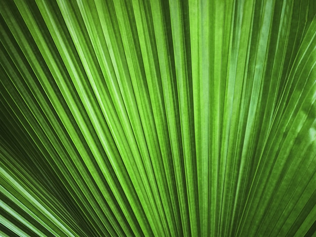 Volledige frame achtergrond van groene palmblad textuur