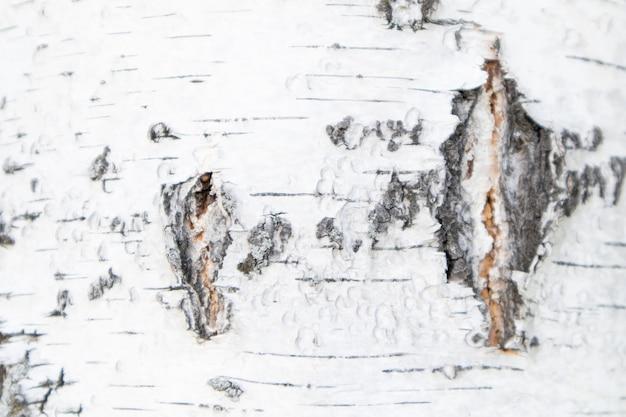 Volledige frame textuur van witte berkenschors. berk textuur achtergrond.