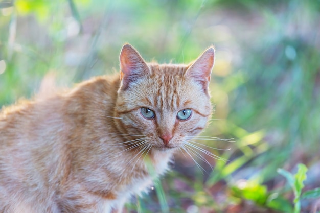 Volwassen binnenlandse kattenzitting in gras