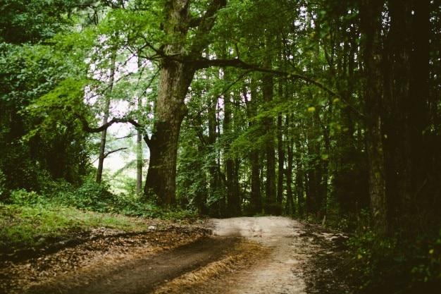 Volwassen bos