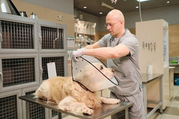 Volwassen dierenarts die een medische halsband om de huishond doet tijdens een medische procedure bij de dierenartskliniek