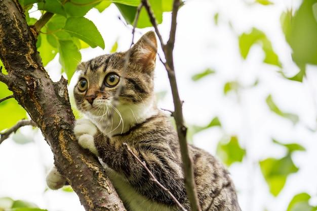 Volwassen huiskat portret