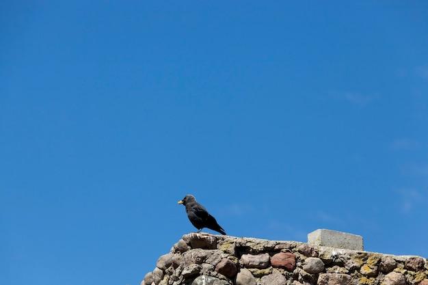 Volwassen kraai zit op een hek tegen de blauwe hemel, silhouet van een zwarte vogel