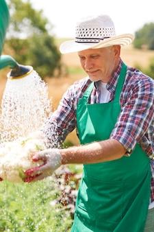 Volwassen man die verse groente op gebied schoonmaakt