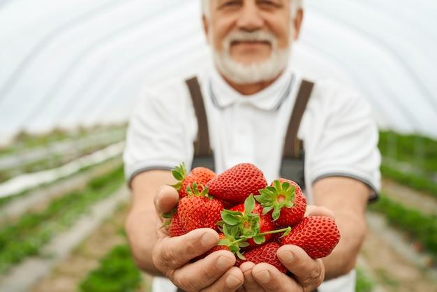 Volwassen man met rijpe rode aardbeien in handen
