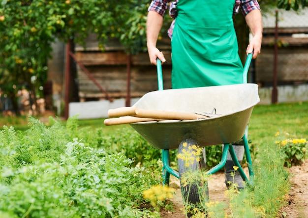 Volwassen man metalen kruiwagen tussen gewassen te duwen