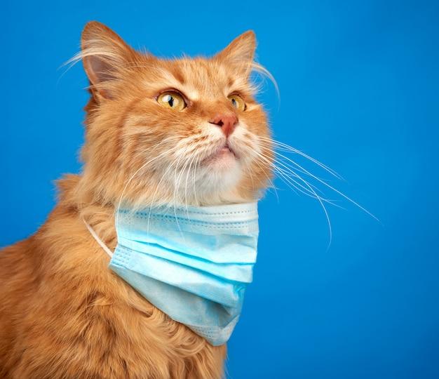 Volwassen rode pluizige kattenzitting in een wegwerp medisch masker