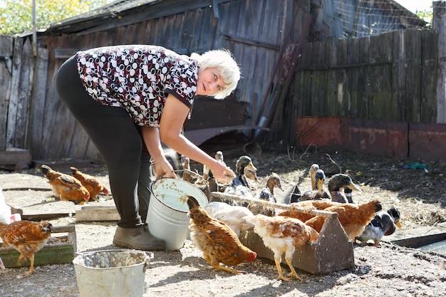 Volwassen vrouw die kippen en eend voedt op de boerderij op het platteland
