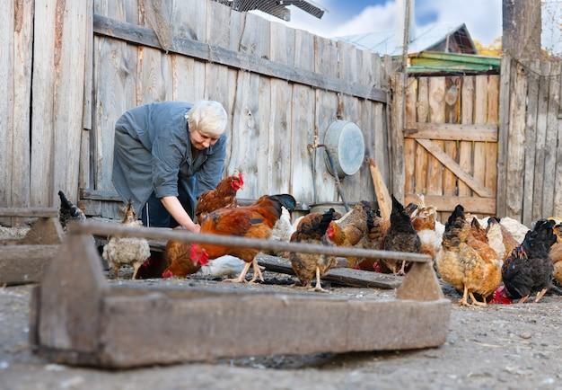 Volwassen vrouw die voor de kippen op de boerderij zorgt