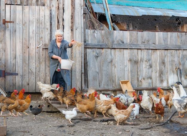 Volwassen vrouw graan gevogelte kippen en ganzen op de boerderij voederen