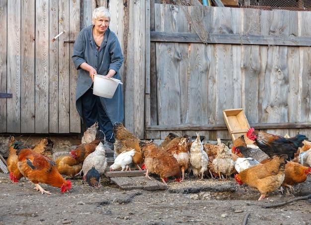 Volwassen vrouw met een emmer kippenvoer