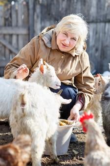 Volwassen vrouw voedt kleine geiten en kippen op de thuisboerderij