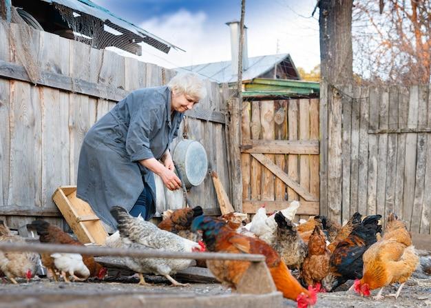 Volwassen vrouw zorgt voor het pluimvee op de boerderij