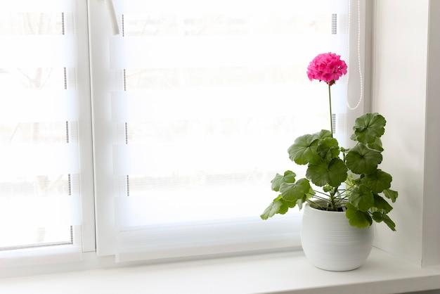 Voor het raam hangen witte jaloezieën en op de vensterbank staat een pelargonium met een rode bloem.