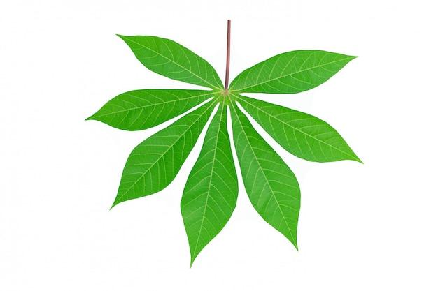 Voor maniokblad dat op witte achtergrond wordt geïsoleerd