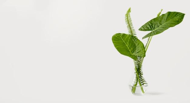 Vooraanzicht botanisch concept met kopie ruimte