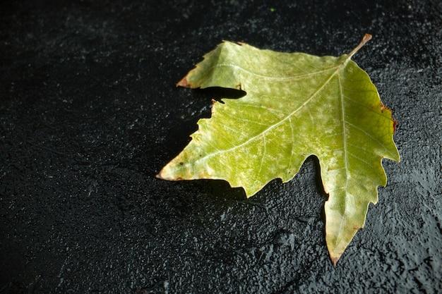 Vooraanzicht groen blad op de donkere achtergrond boom herfst kleurenfoto Gratis Foto